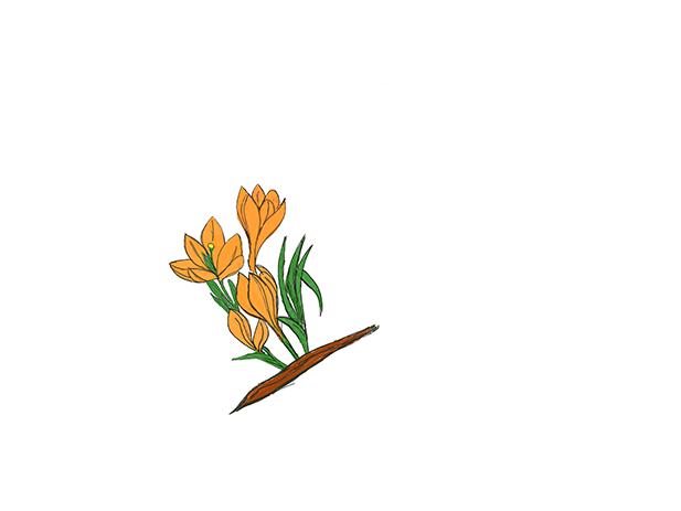 Florzinhas | Litle Flowers