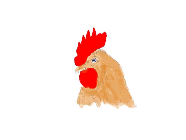 Galinha | Chiken