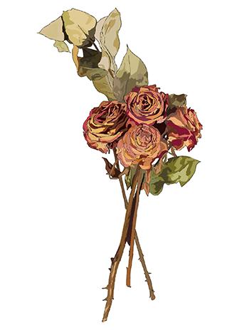 Rosas | Roses